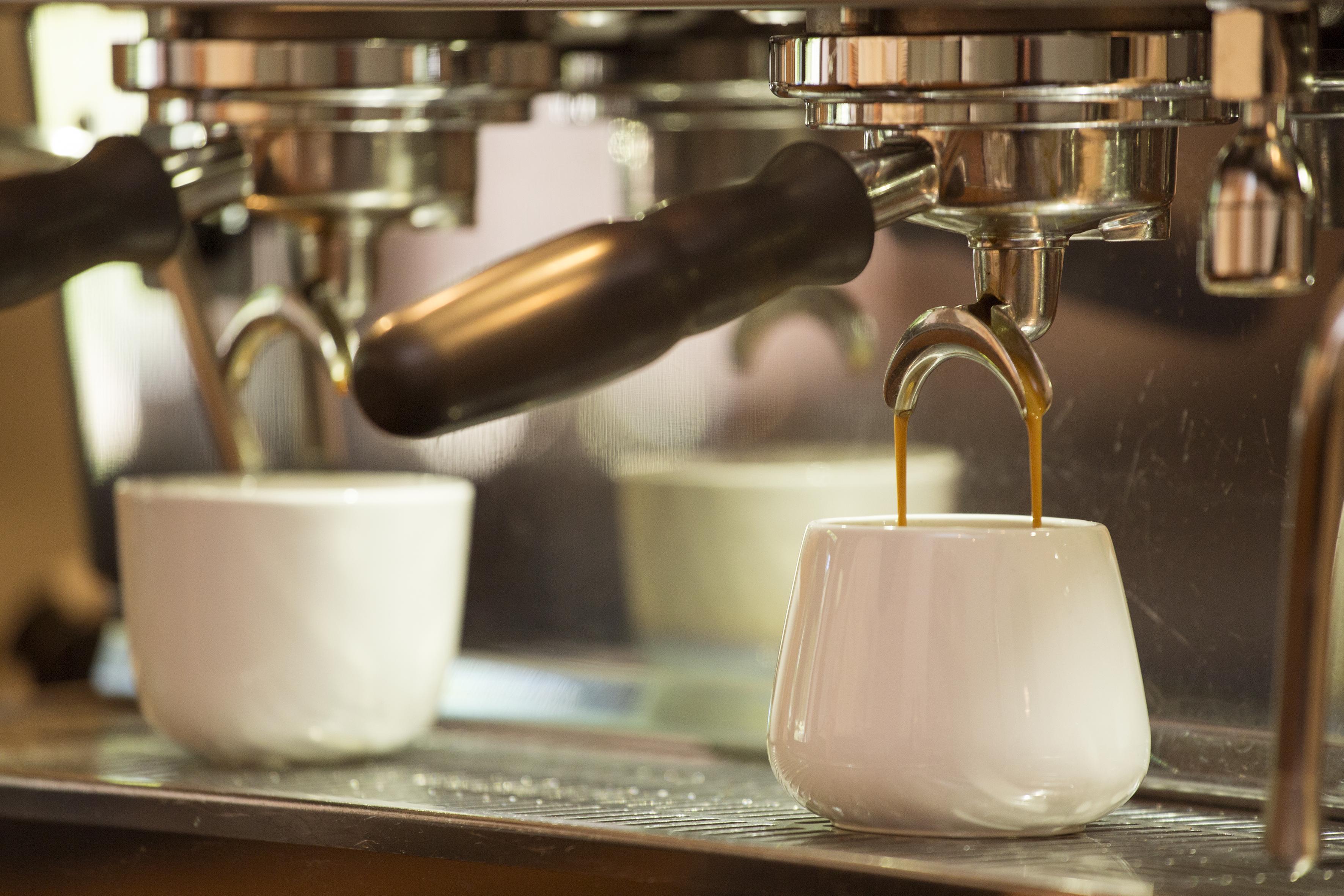 espresso_tulip_open_20