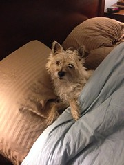 Molly ready for bed.