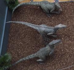 Jurassic World Raptors at the Bullring
