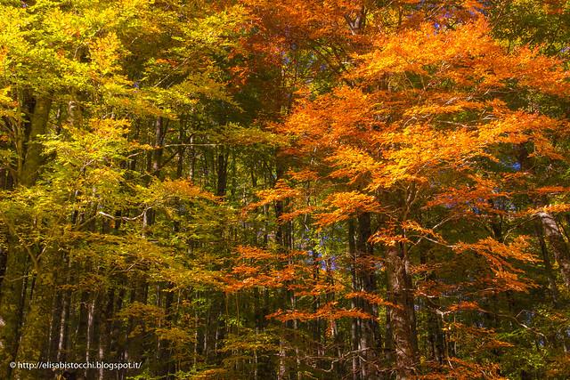 Monte Terminillo - Autumn 2015