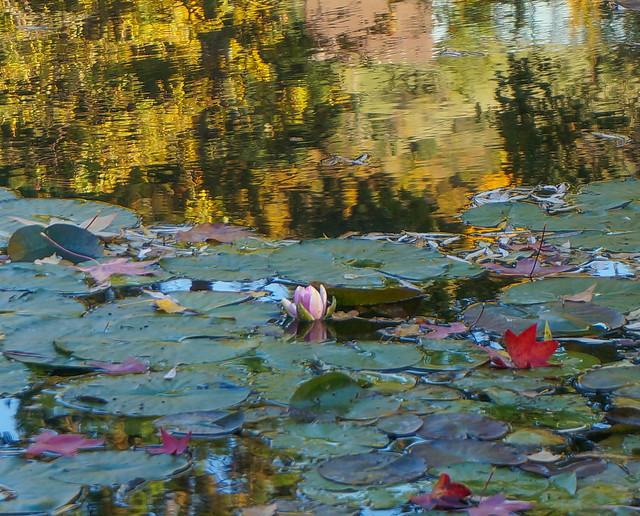 Giverny-71.jpg