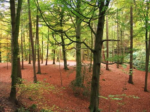 Gelt Woods (4)