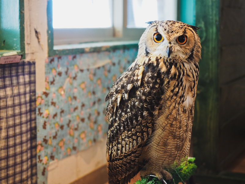 Lucky-Owl-Cafe-Osaka-16