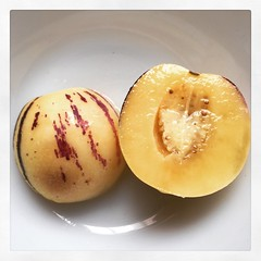 ginsengfruit02