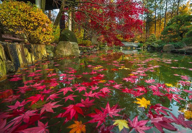 Floating Autumn