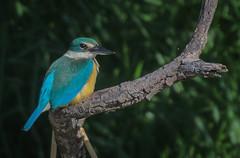 Sacred Kingfisher: A Sacred Moment