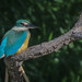 Sacred Kingfisher: A Sacred Moment by birdsaspoetry
