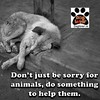 Don't just feel sorry for animals, Do something to help them #helpanimal #savedog #stray #dog #petsofinstagram #love #pet