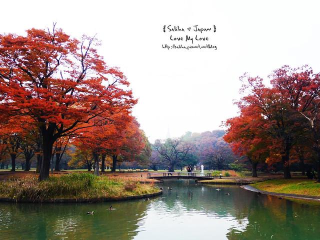 日本東京景點澀谷區代代木公園賞楓葉 (24)