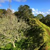 Explored another maunga cone today. Mt.Albert-Owairaka Domain. #Auckland