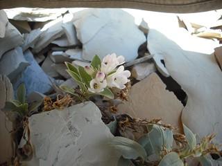 BLM Colorado Works with Partner to Study Rare Colorado Plant Species