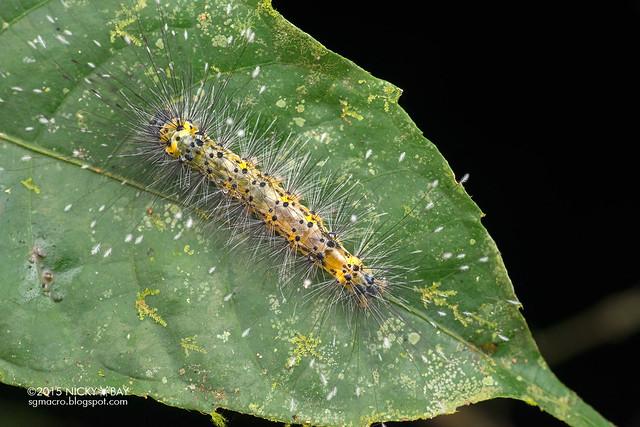 Caterpillar - DSC_2645