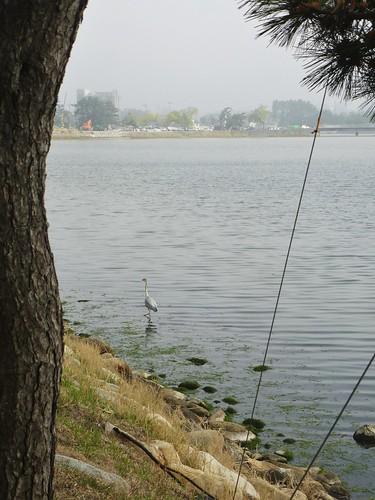 Co-Gangneung-Gyeongpoho-Lac (3)