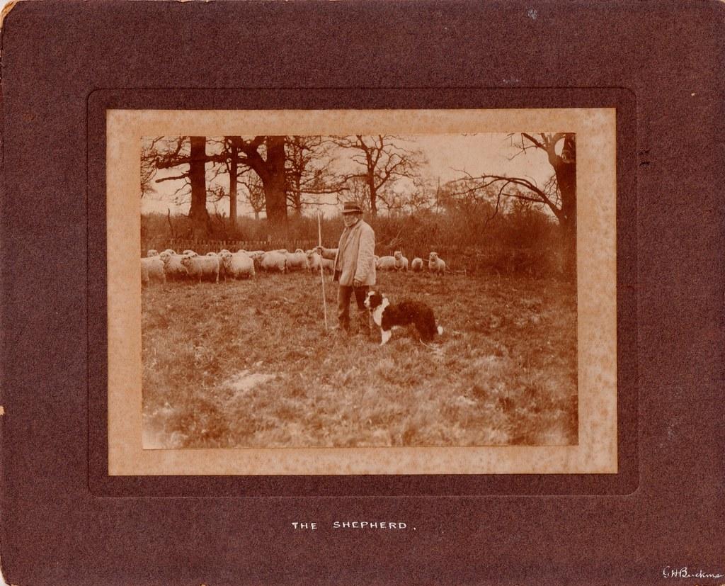 The Shepherd by G. H. Buckman