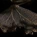Vanilla leaf skeleton by nervous system