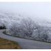Blue Ridge Parkway Frost by Joe Franklin Photography