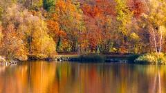 Autumn surrounded