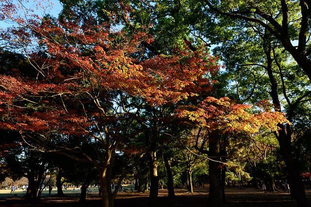 Yoyogi Autumn - Constast