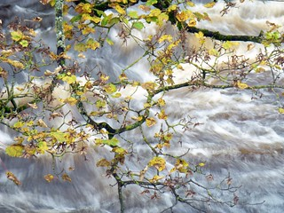 Leaves and water, River Wharfe, Bolton Abbey