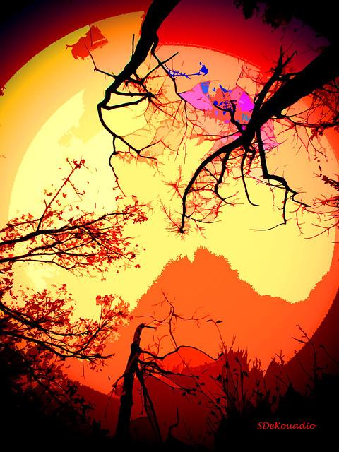 Autumn Trees silhouette, Canon POWERSHOT ELPH 135