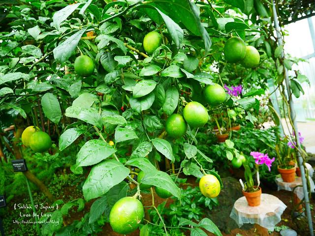日本東京景點新宿御苑溫室植物 (27)