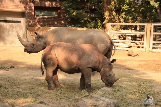 Zoo Berlin 14.08.2015  052