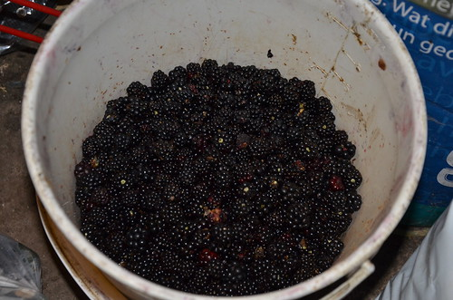 blackberries Oct 15