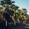Palm tree lined road, 10/2/14