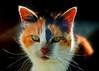 Mangle The Cat Brilliant Fibres III
