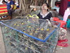 Selling live birds near sule Paya, Yangon