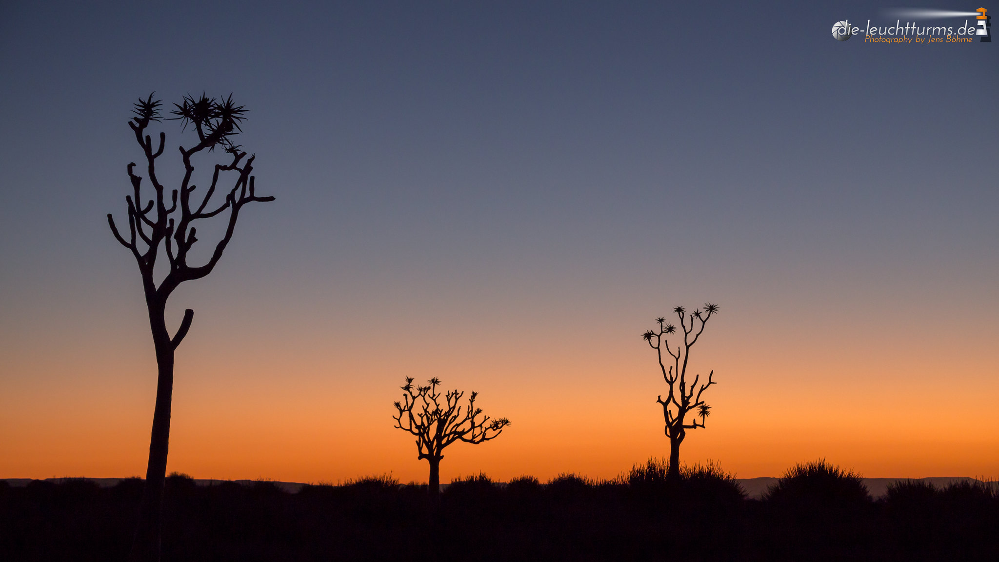 Quivertrees at dusk