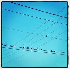 #birdsonawire #egbdf ##birdsofinstagram #southforthewinter #telephonelines #sunset