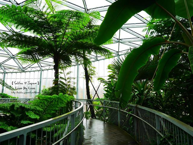 日本東京景點新宿御苑溫室植物 (9)
