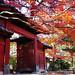 豪徳寺の赤門 by inumochi