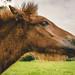 wishes were horses by stephubik