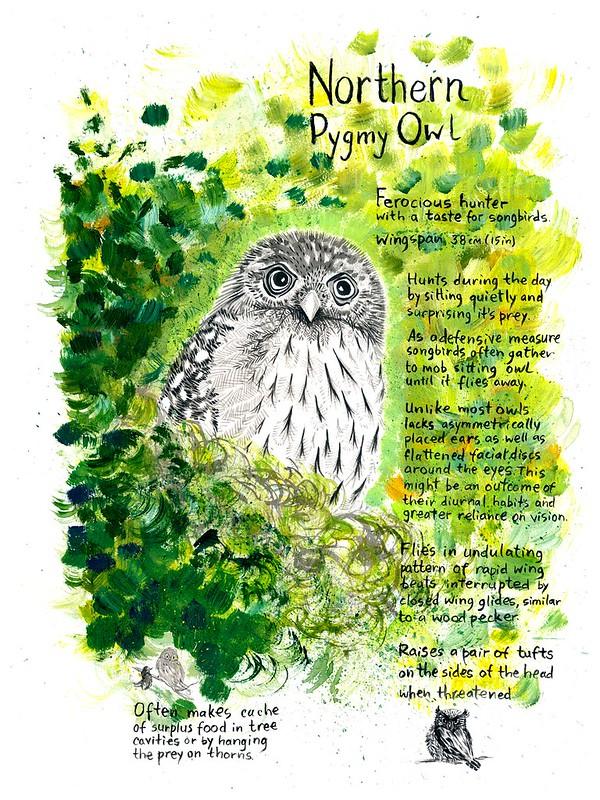 Owls_09_Pygmy