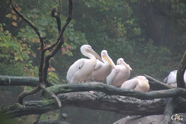 Besuch Zoo Rostock 17.10.2015126