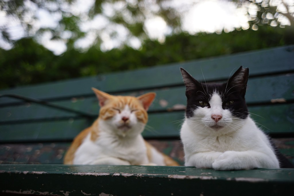 Two cats in Mejo park 2015/09 No.1.