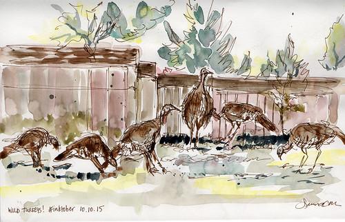 Wild turkeys, San Jose, CA #inktober