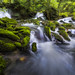 Flow Between the Moss - Luis Lyons Photography