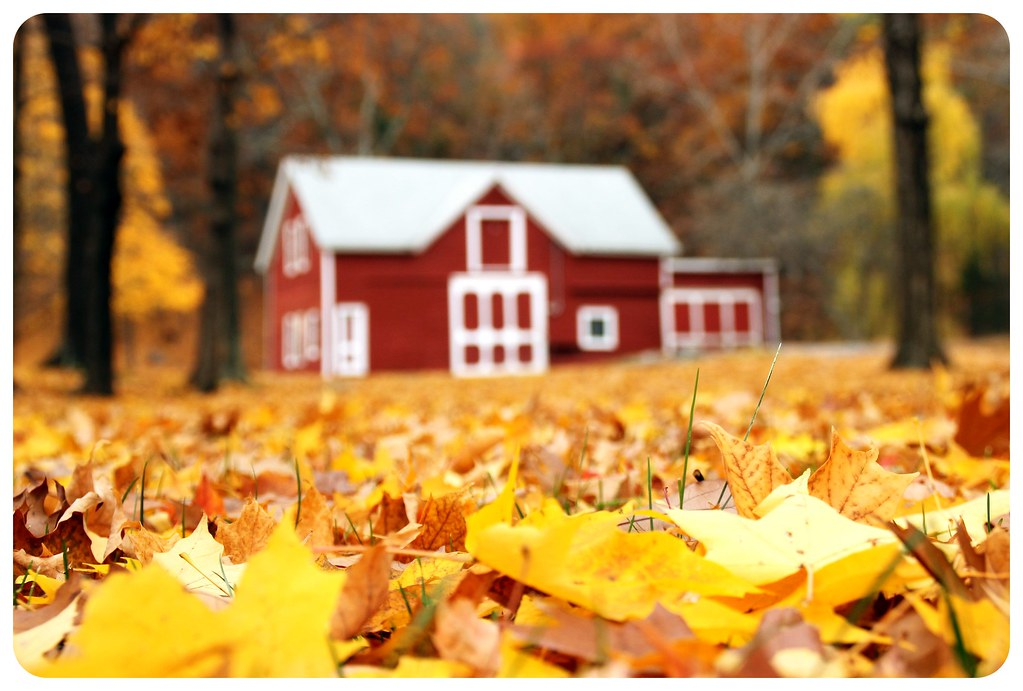 new york fall foliage road trip barn