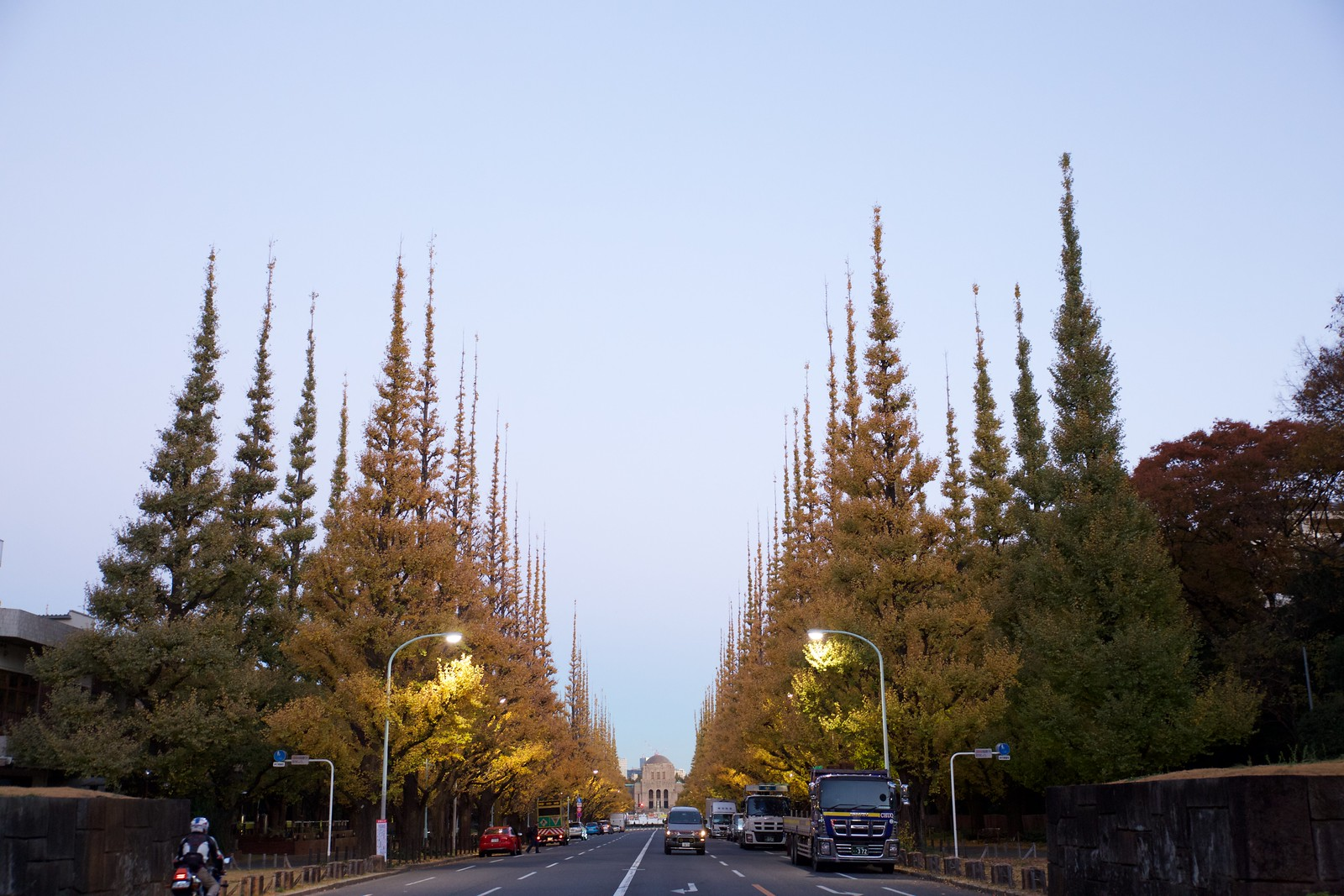 神宮外苑の銀杏