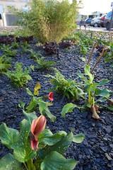 mar, 01/12/2015 - 10:11 - place De Lattre de Tassigny - place De Lattre de Tassigny travaux pour la création d'un jardin