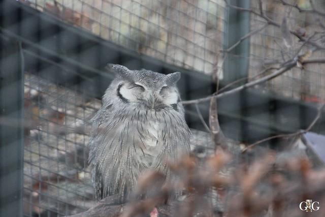 Besuch im Berliner Zoo 06.12.20155