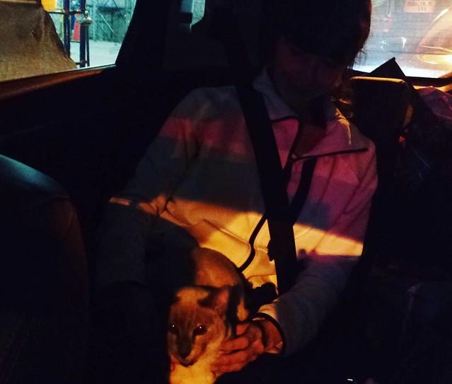 Cruising with my Xanadu. #xanadupluto #siamese #catlady #catsofinstagram #catlover #siamesecat