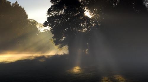 park morning light shadow sun mist tree grass wales sunrise canon eos dawn outdoor cardiff 5d llandaff butepark pontcanna mkiii llandafffields stevegarrington