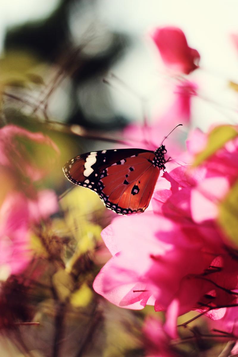 butterfly4 copy