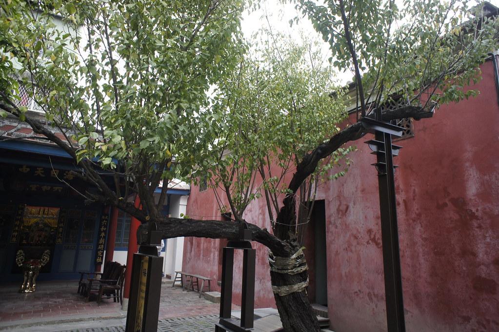 台南中西區新美街一日遊 (9)