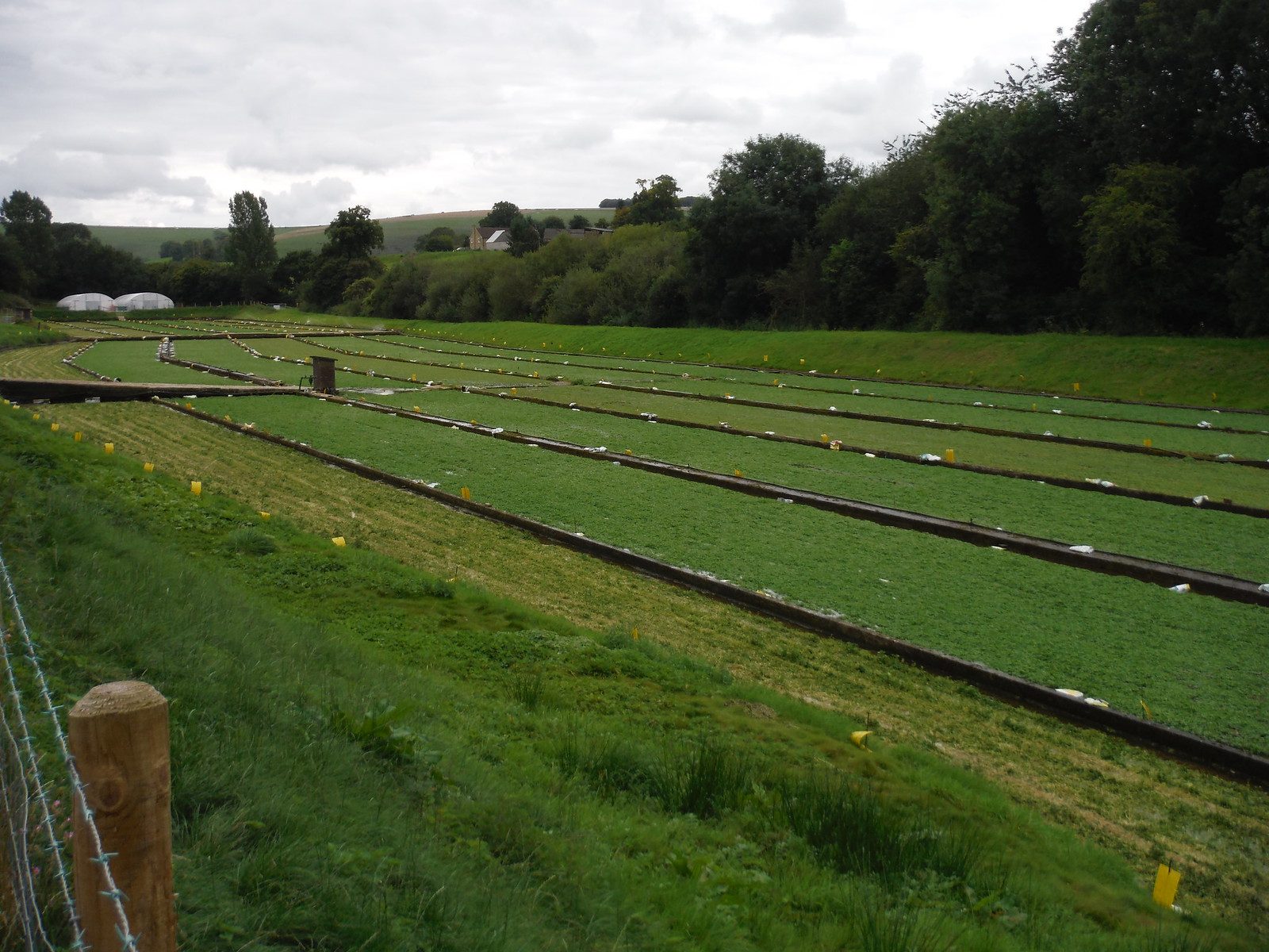 Watercress Farm, Detail SWC Walk 251 Tisbury Circular via Ludwell and Berwick St. John