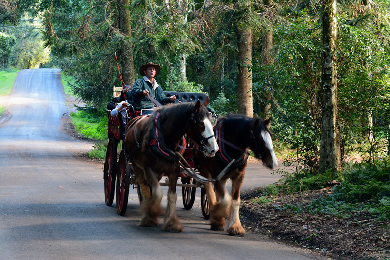 Horse Cart Bunya Mountains